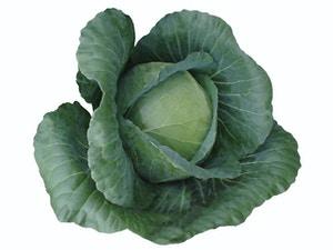 Cabbage - GREEN CORENET (WINTER