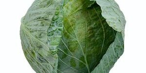 Cabbage - GREEN STAR