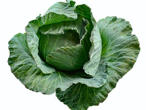 Cabbage STAR-3316
