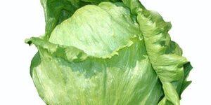 Lettuce : GRAND SLAM