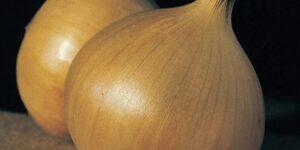Onion - CALEDON GLOBE