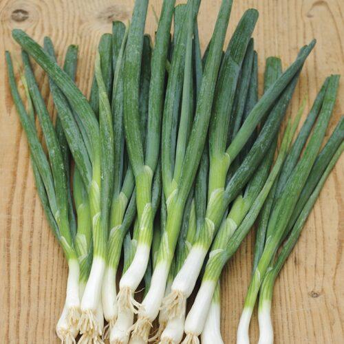 Onion - Slender Star