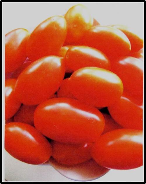 Tomato - little wonderTomato - little wonder