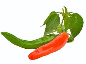 Hot Pepper -Tracer