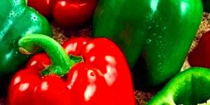sweet-pepper california wonder